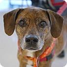 Adopt A Pet :: Truman **Adoption Pending**