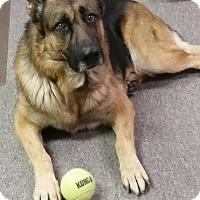 Adopt A Pet :: Justice - Greeneville, TN