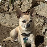 Adopt A Pet :: Lucky - Vacaville, CA