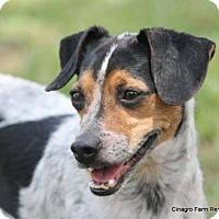 Adopt A Pet :: Sweetz - Leesburg, FL