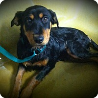 Adopt A Pet :: Prince aka Stan - Virginia Beach, VA