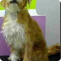 Adopt A Pet :: Harry-Adoption Pending - Boulder, CO