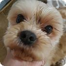 Adopt A Pet :: Happy