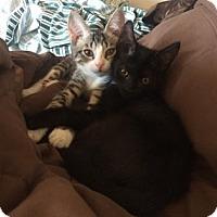 Adopt A Pet :: Dotti (foster care) - Philadelphia, PA