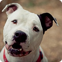 Adopt A Pet :: Hamlet-ADOPTION FEE SPONSORED! - Lincoln, CA