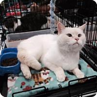 Adopt A Pet :: Asia - Harrisburg, NC
