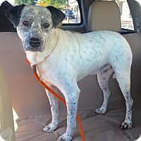 Adopt A Pet :: Davis - Mount Pleasant, SC