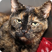 Domestic Shorthair Cat for adoption in Marietta, Ohio - Lilly (Spayed)
