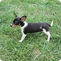 Adopt A Pet :: Prince Snugabug - West Warwick, RI