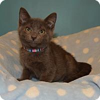 Adopt A Pet :: Shepard Fairey - Cincinnati, OH
