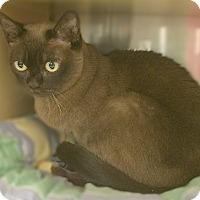 Adopt A Pet :: Julie - San Juan Capistrano, CA