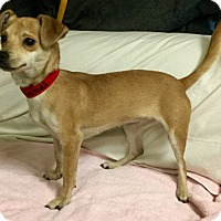 Adopt A Pet :: Mabel - Phoenix, AZ