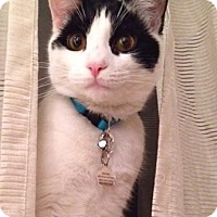 Adopt A Pet :: Bandit - Staten Island, NY