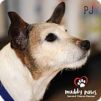 Adopt A Pet :: PJ - Council Bluffs, IA