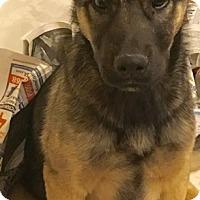 Adopt A Pet :: Shep Boy - Moreno Valley, CA