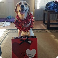 Adopt A Pet :: Nolla - Omaha, NE