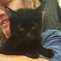 Adopt A Pet :: Ebony - Lyons, IL