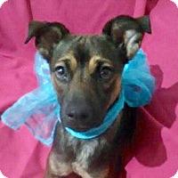 Adopt A Pet :: SHASTA - San Diego, CA