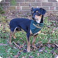 Adopt A Pet :: Bandit - Mocksville, NC
