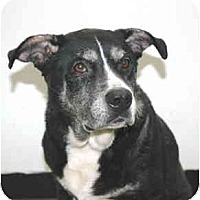 Adopt A Pet :: Dina - Port Washington, NY