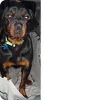 Adopt A Pet :: Elroy - latrobe, PA
