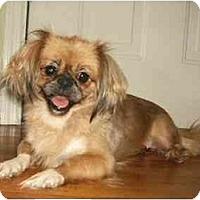 Adopt A Pet :: Alexandria - Mooy, AL