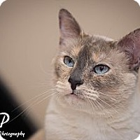 Adopt A Pet :: VIOLET - Fountain Hills, AZ