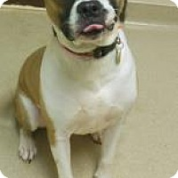 Adopt A Pet :: Tanner - Gary, IN