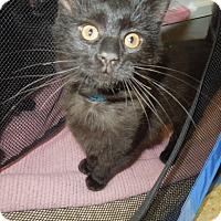 Adopt A Pet :: Clark - Medina, OH