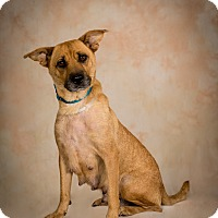 Adopt A Pet :: Little Lady - Jupiter, FL