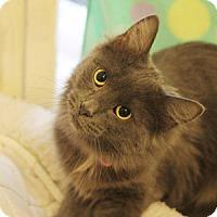 Adopt A Pet :: Sheba - New York, NY
