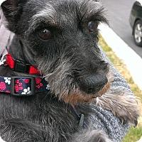 Adopt A Pet :: Ilsa-News! - Laurel, MD