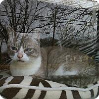 Adopt A Pet :: Leia - Wichita Falls, TX