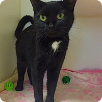 Adopt A Pet :: Lois Lane - Mission Viejo, CA