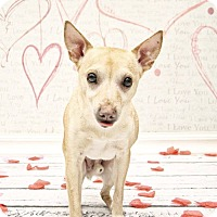 Adopt A Pet :: Archie - West Allis, WI