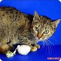 Adopt A Pet :: Ronda - Sherwood, OR