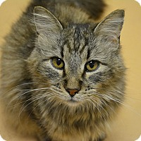 Adopt A Pet :: Forrest - Springfield, IL