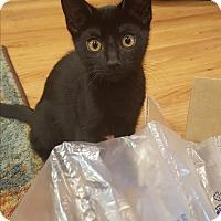 Adopt A Pet :: Pollyanna - Homewood, AL