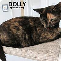 Domestic Shorthair Cat for adoption in Elizabeth City, North Carolina - Dolly