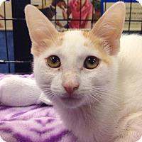 Adopt A Pet :: Spike - Gainesville, FL