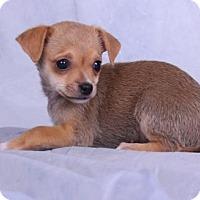 Adopt A Pet :: Dwayne - Colorado Springs, CO