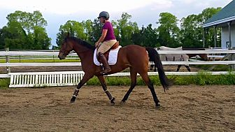 Standardbred for adoption in Salisbury, Maryland - Farah