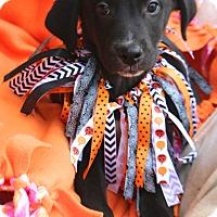 Adopt A Pet :: Stockton - MEET ME - Woonsocket, RI