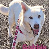 Siberian Husky Dog for adoption in Carrollton, Texas - Gabbie