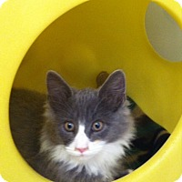 Adopt A Pet :: Poe - Warren, OH
