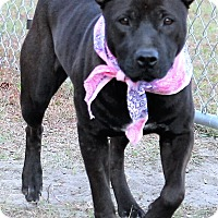 Adopt A Pet :: Gretchen - Jesup, GA