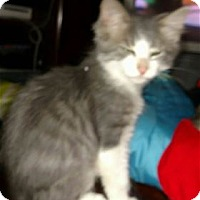 Adopt A Pet :: Sea Ray - Rocklin, CA