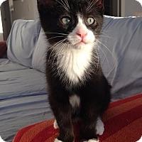 Adopt A Pet :: Miles - Toronto, ON
