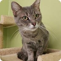 Adopt A Pet :: Frida - Newburgh, IN