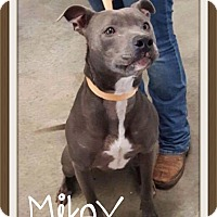 Adopt A Pet :: Mikey - Fort Wayne, IN